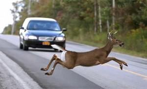 deer24n-1-web