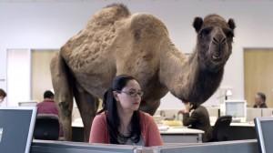 camelhumpday
